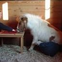 Equine Clicker Training - Katie Bartlett