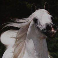 Bergren Family Arabians