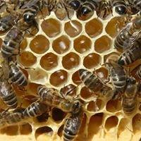 Μελισσοκομία Καλαβρύτων Καραγκούνη
