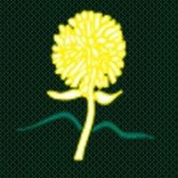 Pukekohe Rugby Club