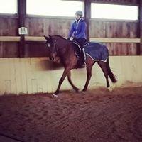Wild Rose Equestrian