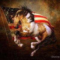 Equine Bodyworks - Denise Surek