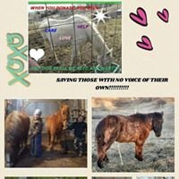 Heart For Hooves Rescue Inc.
