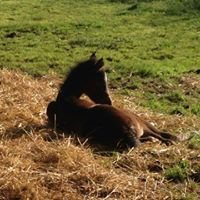 Adelaide Hills Horse Agistment