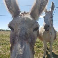 Donkey Shelter Tongala