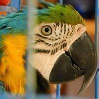 parrot stoupa