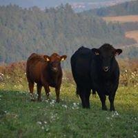Rolnická společnost Lesonice a.s.