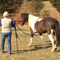 Kindred Spirit Whole Horse Care, Inc.