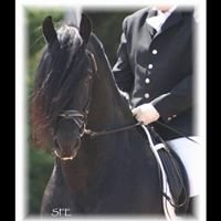 Legend Woods Friesian Heritage & Sporthorses