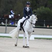Clover Connemara Sporthorses