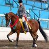 Kim Christy Show Horses