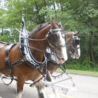 HKS Clydesdales