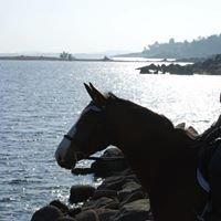 Los Lagos Equestrian, Inc.