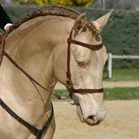 Vente chevaux Pure race espagnol et lusitanien