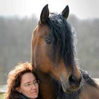 Spanische Pferde Deutschland in Traventhal UG