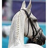 Canterbury Equine Clinic