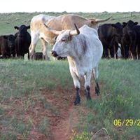 Double Rafter Cattle Drives