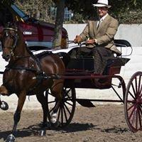 L.A. County Fair International Draft Horse, Mule and Pleasure Driving Show