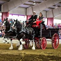 Thoms & Fevold Clydesdales (TF Clydes)