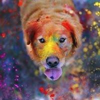 webdog.lv