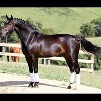 Sheoak Park Performance Horses