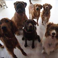 Hotel dla psów: Psi Zakątek