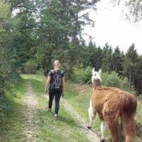 hilberather-wanderlamas