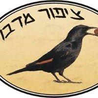 Desert Bird GuestHouse ציפור מדבר