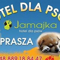 Hotel dla psów Jamajka
