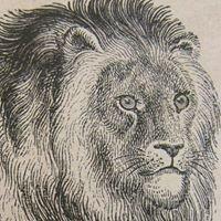 Leijona & Satakieli