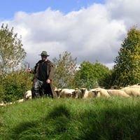 Schafe sind toll