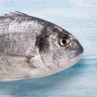 freskada seafood