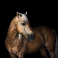 Oakwood Park Equestrian