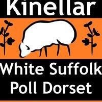 Kinellar White Suffolk & Poll Dorset Stud