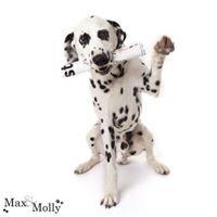 Max & Molly Pet Photography