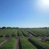 Arnotts Vegetable Farms Pty Ltd