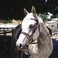 Four Oaks Equestrian Centre