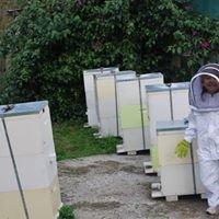 Blue Tree Honey Farm