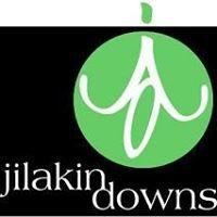 Jilakin Downs Dorper