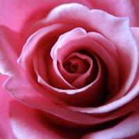 Tamar Valley Roses