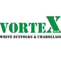 Vortex White Suffolk & Charollais Stud