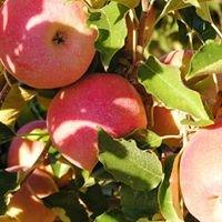 Plunkett Orchards