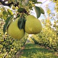 Magarey Orchard