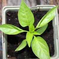 HorticulturAl: Garden Innovations