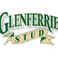 Glenferrie Stud