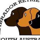Labrador Retriever Club of South Australia Inc