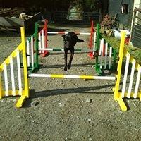 Agility Dog Jumps