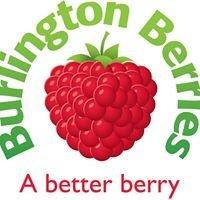 Burlington Berries Pty Ltd