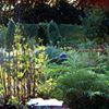 WESTERS trädgård - puutarha - garden