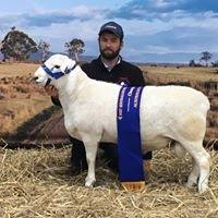 Gamadale Australian White Sheep Stud